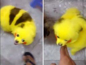 游戏玩家将小狗染成皮卡丘 被网友批评惨无人道
