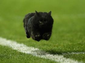 一只黑猫闯入橄榄球比赛场地 它的照片在网上掀起PS比赛