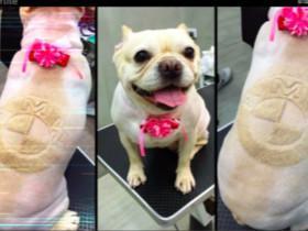 理发师发现给人理头发没啥前途 决心转行给宠物做美容