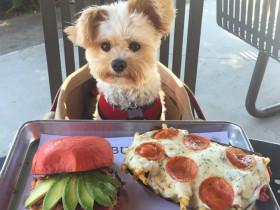 """网上非常红的""""美食控""""狗狗Popeye 过着让人都羡慕的生活"""