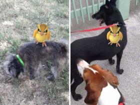 救助站负责人利用了一款热门游戏 让很多人主动去帮忙遛狗