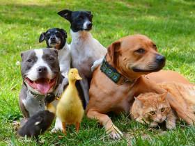 热衷救助流浪动物的一对夫妻  与7只动物幸福地生活在一起