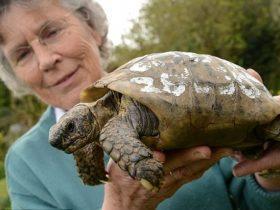 英国一只109岁的乌龟从家里跑丢 龟壳的电话号码让它回到主人身边