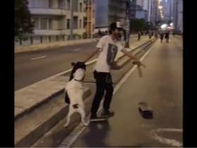 一只喜欢玩滑板的狗狗