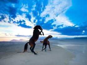 每当对生活感到压抑的时候  摄影师就去拍摄在野外生活的马儿
