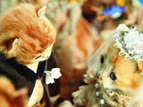 用猫咪尸体做成华丽婚礼  这些艺术品看得我后背发凉