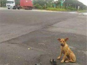 小土狗被农民工弃养,原地守候几个月,最终等来了主人