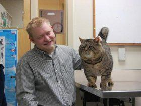 半年前家里的猫走丢了,半年后主人再见到它时吓了一跳