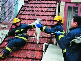 """一只小猫咪爬到树上后被困住 上海消防员展开一场""""救猫""""行动"""