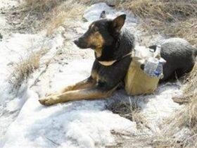小狗每天帮残疾主人往山顶送货,游客看到后感动落泪