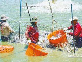 """台湾农渔业者:假南向真""""反中"""" 被民进党赶尽杀绝"""
