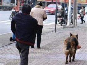狗狗每天帮残疾主人买菜,路人给它火腿肠它却不舍得吃