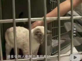监狱养猫计划让囚犯全变猫奴 一个双向救赎的故事