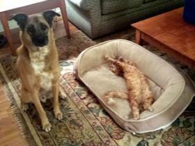 如何让家里的猫咪不害怕狗狗?