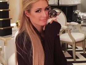 富家女在网络上的炫宠生活 花8000美金买了一只茶杯吉娃娃