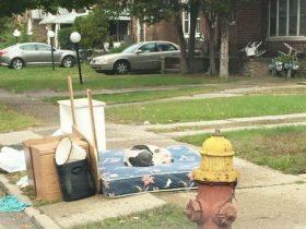 搬家的时候将家具和狗狗抛弃 狗狗还在傻傻地守护主人的东西