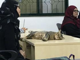 猫咪在大学的课堂上旁听老师讲课 学霸的心最终被学渣的身体打败