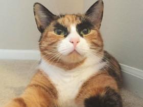 如果你决定收养一只流浪猫,一定要注意这些事情!