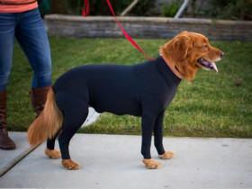 为了防止宠物狗在公共场合掉毛  狗狗专用紧身衣在国外流行