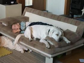 为了阻止患自闭症的儿子做噩梦 父母用一只狗狗解决问题