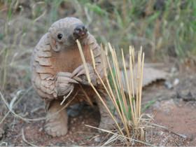 在地球上生活了8000万年的哺乳动物 它们小时候的样子非常可爱