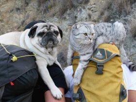 说走就走的旅行!一猫一狗跟随主人徒步超过1400公里