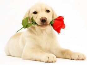 中国宠物行业分析报告 中国宠物行业发展历程