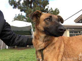 被抛弃的狗狗在救助站遇到家人 没想到他们领养了另一只狗狗
