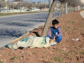逃难的小孩把毯子盖在受伤流浪狗身上 成为了网络上的一个焦点