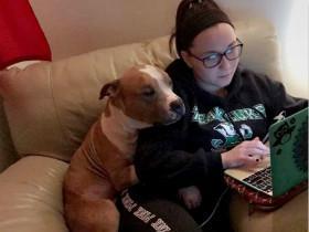 陪伴女儿五年的狗狗不幸死去,一个伤感的故事