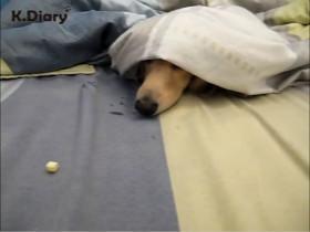 狗狗不想起床怎么办