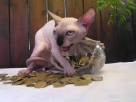 当主人给家里的猫咪拍照时 往往会被猫咪吓出一身冷汗(28张)