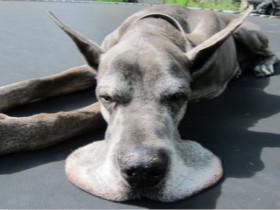 狗狗被弃荒郊野岭,四肢嘴巴都被胶带牢牢勒紧
