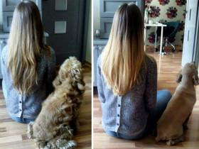 """狗狗们做美容后的对比照片 有一种""""判若两狗""""的错觉(27张)"""