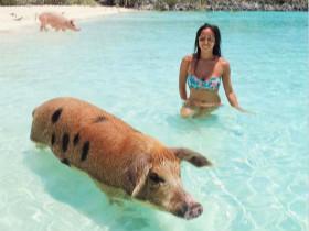 女孩买的小香猪长到300斤,在一起8年,被迫搬了5次家