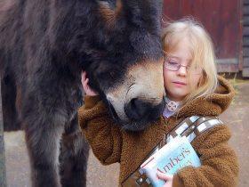 """遭受了命运不公的小女孩 与一头毛驴""""惺惺相惜  """"的故事"""