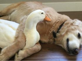 生病年迈的狗狗,见完新生的小主人后就去世了