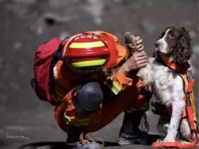 """连续工作近20个小时,搜救犬""""小虎""""在茂县灾区累倒了"""