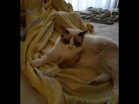 """一只早晨在""""踩奶""""的猫咪"""