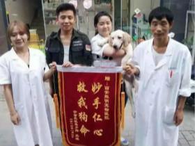 宠物医院收到的一些锦旗,上面的内容能让人忍不住笑出来!