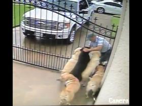 自家狗狗喜欢了一位邮递员