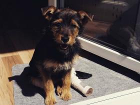 摘录几条德国的养犬规定,希望中国能够借鉴