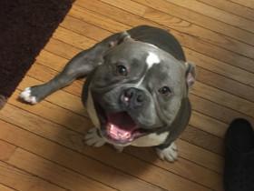 女子呼吁网友领养一只非常可爱狗狗,一位陌生的神秘男子出现