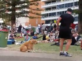 狗子在公园撒泼耍无赖、不肯回家