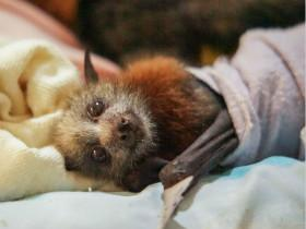 看了这些照片,也许会改变你对蝙蝠害怕的心理(14张)