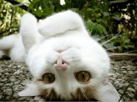 猫咪干呕、咳嗽、不吃东西,精神萎靡不振,应警惕毛球症