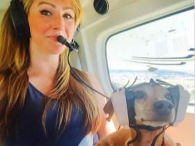 飞国外时,看到老外包里装着狗狗,狗狗如何进入飞机客舱?