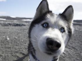 狗子们偷了捡屎官的GoPro,这神奇的拍摄视角也太可爱了!