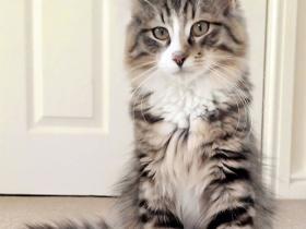 猫咪丢失了14个月,原来它发现了一家猫粮工厂,才不肯回家