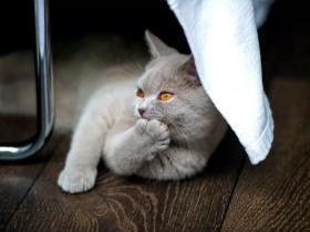 人可以吃猫粮吗?